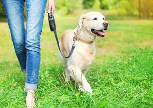 Dog Walking Port Elizabeth