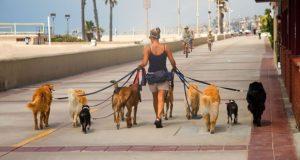 executive dog walking pe